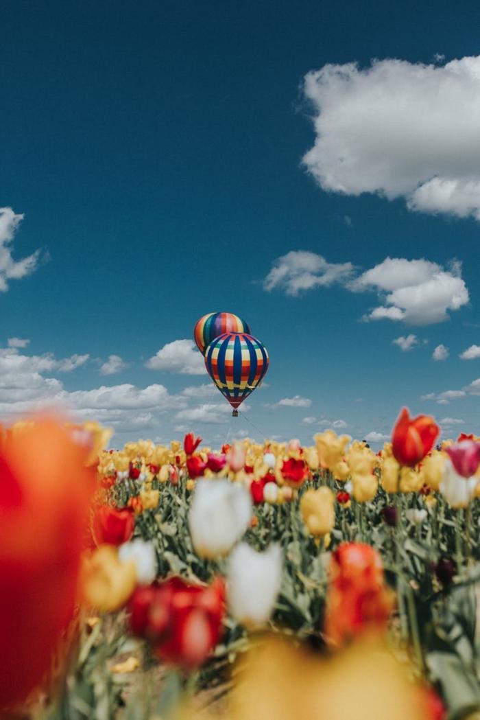 los mejores fondos de pantalla que puedes descargar gratis y utilizar en tu ordenador, tulipanes en color rojo y amarillo
