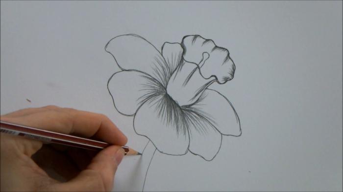 como dibujar una rosa y un narciso, ideas de fotos bonitas a lapiz, fotos de dibujos originales y faciles de hacer en casa