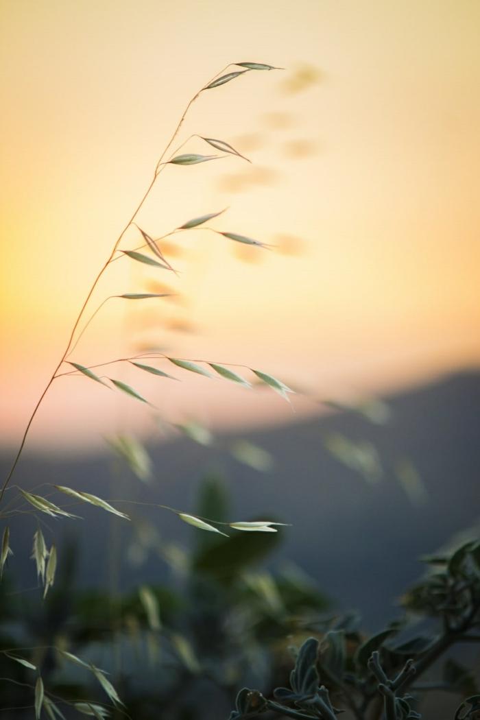 preciosos detalles de la naturaleza, imagees de los campos de trigo en verano en atardacer, imagenes bonitas de paisajes