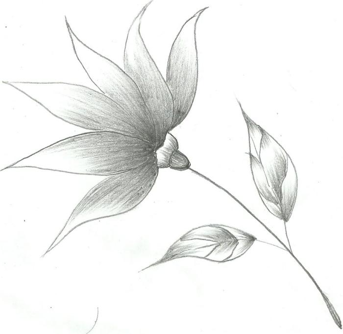 dibujos a lápiz con diferentes técnicas, ideas de dibujos originales y fáciles de hacer en casa para principintes fotos