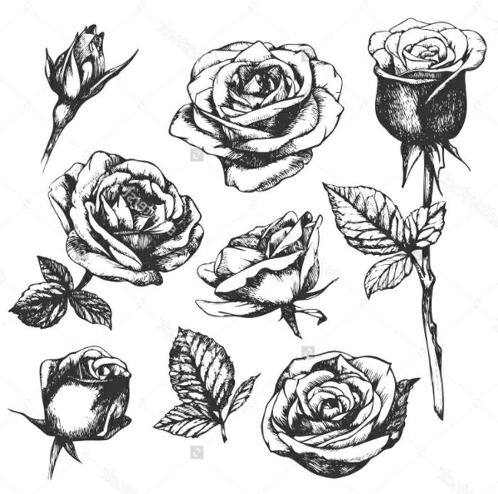dibujos en blanco y negro que enamoran, dibujos a rosas bonitos, fotos de dibujos con bonitas técnicas, ideas de dibujos