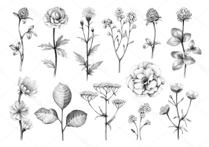 diferentes tipos de flores de campo originales, dibujos de flores bonitas en estilo vintage, diseños de tatuajes con flores
