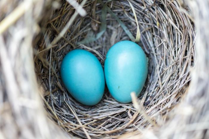 paisajes bonitos de primavera, fotos de pascua bonitos, fotos de huevos pintados, ideas de fotos para descargar