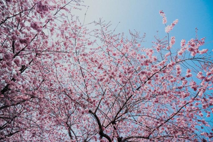 fondos de pantalla con bonitos árboles florecidos, paisajes preciosos, imagenes calmantes que estimulan el cerebro
