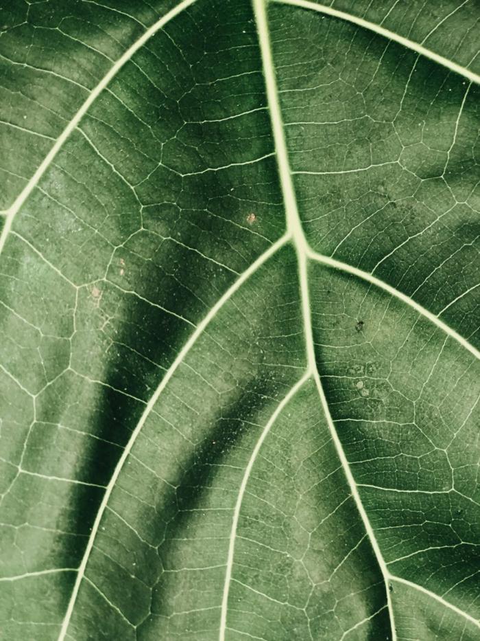 fotografias de alta calidad de plantas y flores para usar como fondo de tu pantalla, imagenes relajantes bonitas para descargar