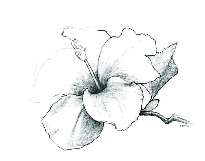 hermosas propuestas de dibujos en blanco y negro de flores, ideas de dibujos para descargar, aprender a dibujar en casa