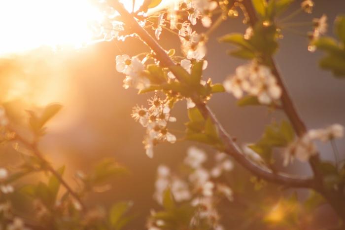 hermosas propuestas de los mejores fondos de pantalla, flores y árboles florecidos para descargar, imagenes hermosas