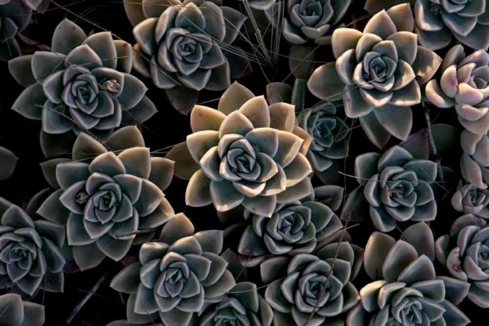 bonitas plantas suculentas, imagenes que tranquilizan la mente, fotos bonitas de plantas y flores, imagenes bonitas de paisajes