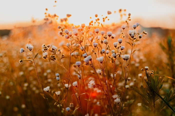 fotos para inspirarte, fotografías de naturaleza que enamoran, campo con flores, los mejores fondos de pantalla