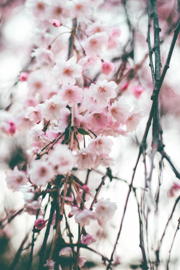 fotos de paisajes bonitos reales en primavera, bonitos frutalaes florecidos, ideas de imagenes preciosos para descargar