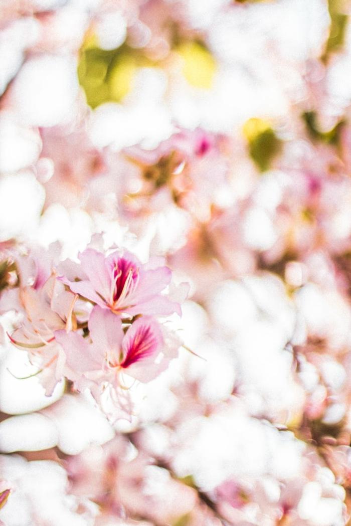 fondos de pantalla primavera е imagenes de paisajes para inspirarte, flores de arboles florecidos en rosado, imagenes para descargar