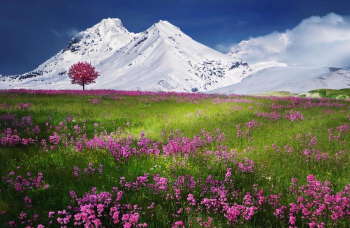 fotografias de alta calidad con imagenes de naturaleza bonitas, fotos de fondo de pantalla