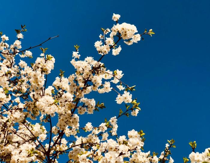 paisajes bonitos del mundo y fotografias de la naturaleza en primavera, flutales florescidos bonitos, flor de manzana