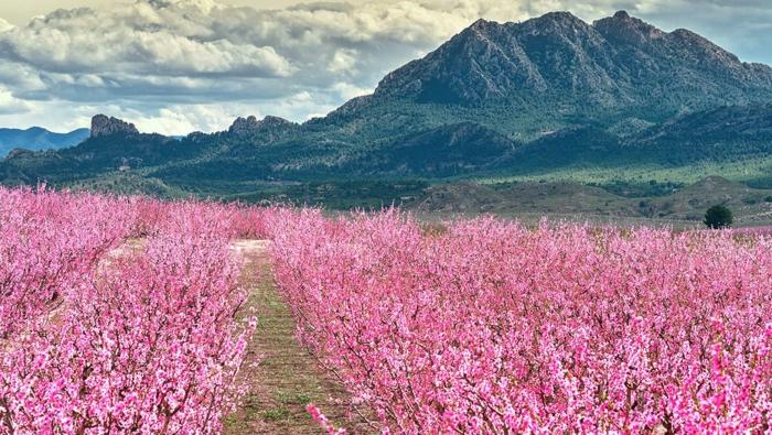 imagenes primavera, paisajes preciosos e impresionantes para descargar, fotos de fondos de pantalla originales