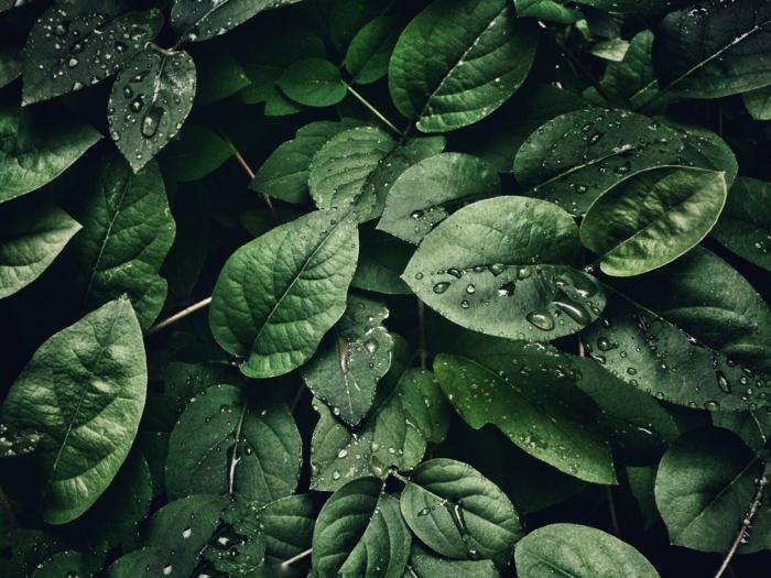 fotos de pantalla con plantas verdes, fondos de pantalla relajantes, ideas de imagenes de relajacion que puedes descargar