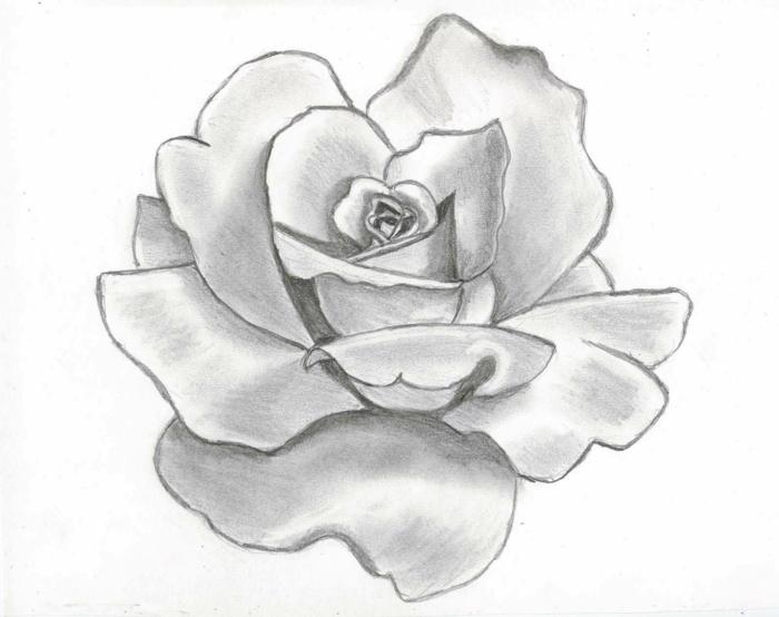 preciosso dibujo de rosa a lápiz, ideas de dibujos para principiantes y avanzados en bonitas imagenes, tutoriales paso a paso