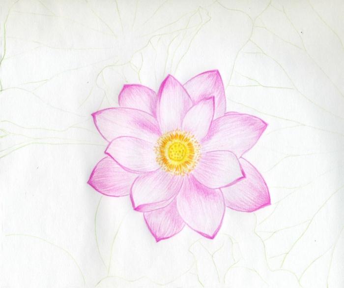 flor hermosa con pétalos en color rosa y corona en amarillo, aprender a dibujar, dibujos básicos paso a paso para dibujar en casa
