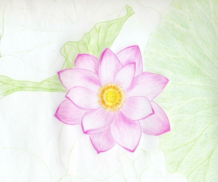 fotos de flores simbolicos super bonitos, preciosa flor en color rosado con corona en amarillo, ideas de dibujos simples