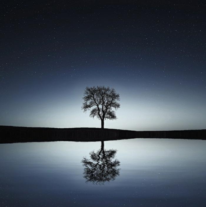 árbol en un lago, fotos de noche que tranquilizan la mente, imagenes bonitas de paisajes bonitas fotos para descargar