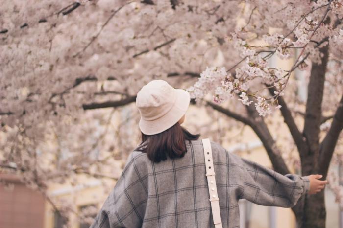 paisajes de primavera inspiradores de japon, paisajes bonitos del mundo, fotos de arboles florecidos en color blanco