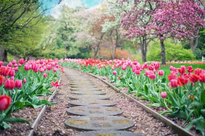 precioso jardin con tulipanes rojos, paisajes bonitos del mundo, ideas de paisjaes de primavera que puedes imprimir