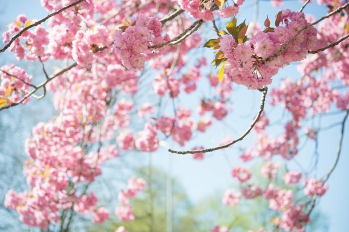 paisajes bonitos del mundo, los colores de la primavera, 100 ejemplos de fotos que puedes usar como fondo de pantalla