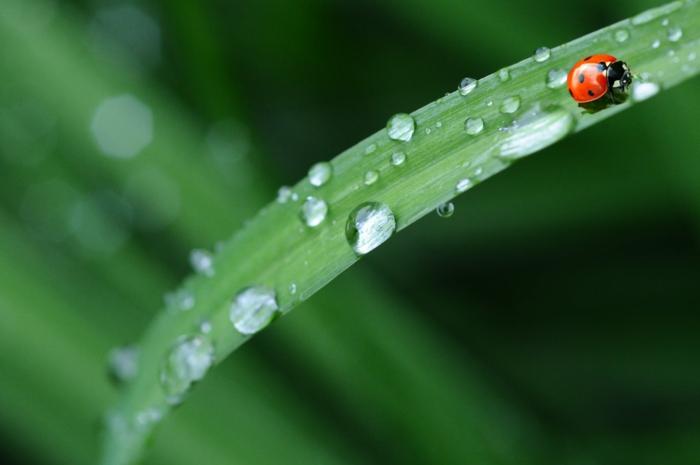 plantas verdes, flores y animales en primavera, fotografias que muestran como renace la vida, fondos de pantalla paisajes
