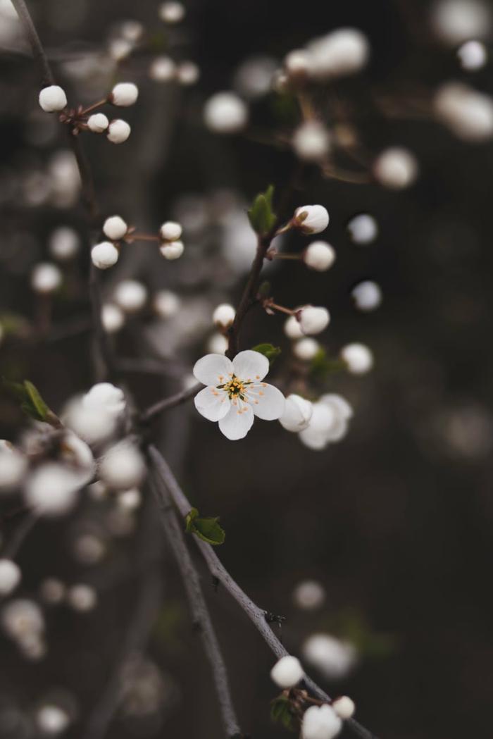 imagenes bonitas y tiernas de flores de primavera, paisajes preciosos con flores y plantas que florecen en primavera