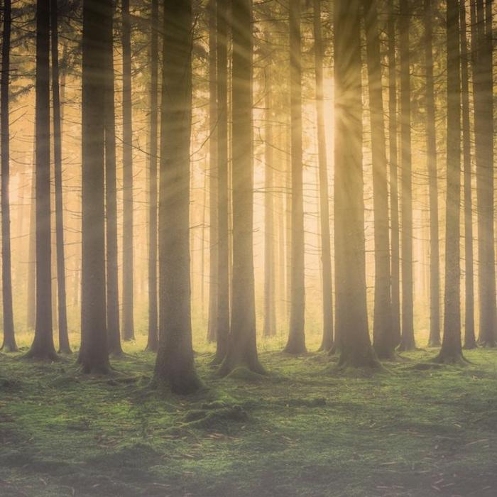 árboles en un bosque y los rayos solares, imagenes relajantes que tranquilizan los nervios y reducen los niveles de estres