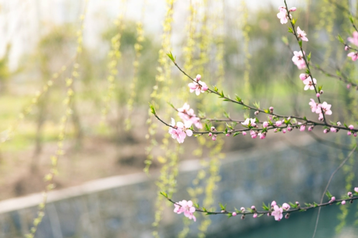 Ideas de fondos de pantalla de flores para descargar y poner como fondos de pantalla, fotos de paisajes bonitos reales