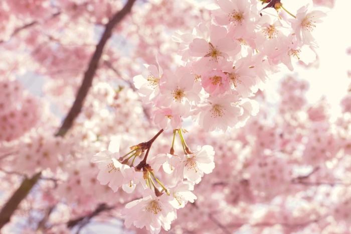 los colores de los arboles florecido, los mejores ejemplos de fotos de fondos de pantalla para un movil u ordenador