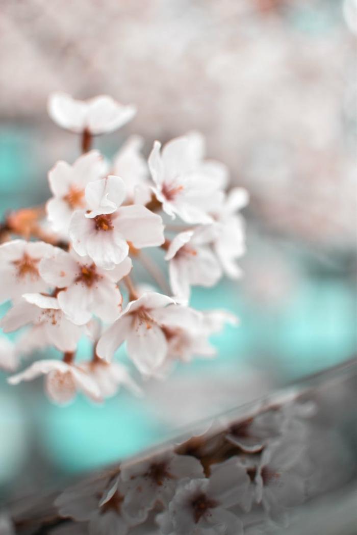 paisajes preciosos de las flores en primavera, maás de 100 imagenes que muesrtan la belleza de los frutales florecidos