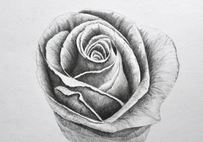 dibujos realistas de flores y animales, dibujos faciles de hacer, dibujos faciles para dibujar, ideas de dibujos simbolicos