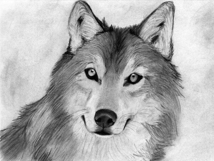 hermosos dibujos de animales en blanco y negro, dibujos en blanco y negro, dibujos faciles de hacer, geniales ideas de dibujos