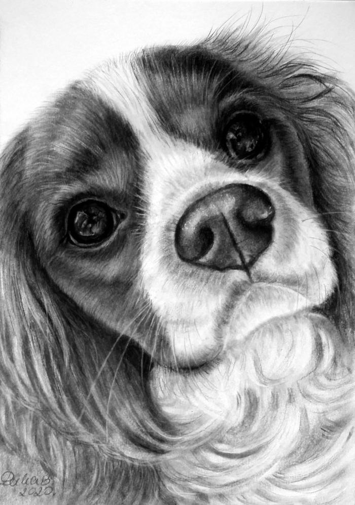 las mejores ideas de dibujos de animales en blanco y negro, dibujos en blanco y negro, dibujos faciles de hacer en fotos