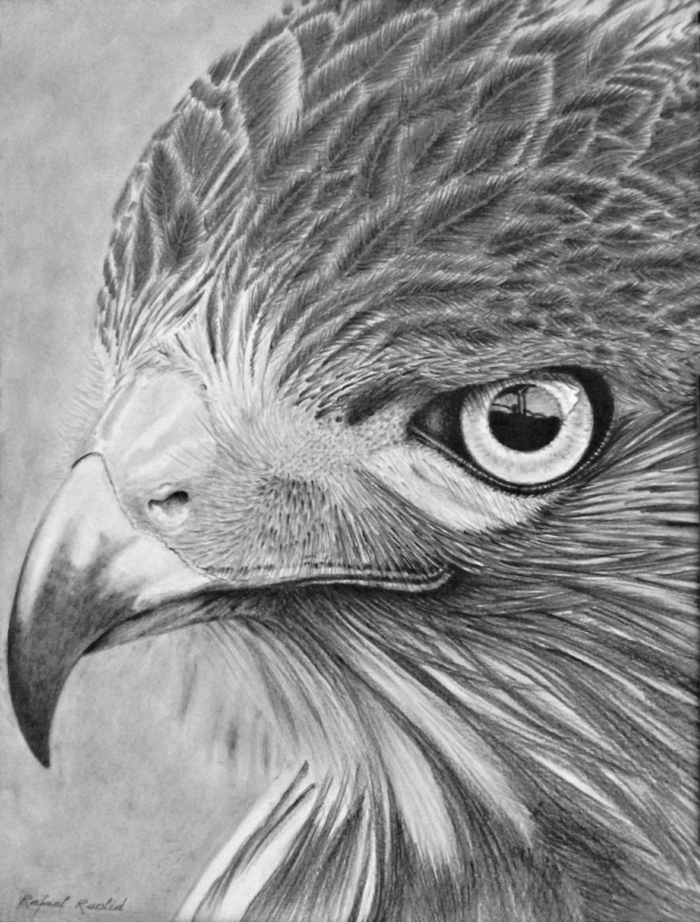 espectaculares ideas de dibujos de animales en blanco y negro, dibujos de paisajes, dibujos realistas