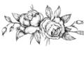 Los mejores ejemplos de dibujos de rosas