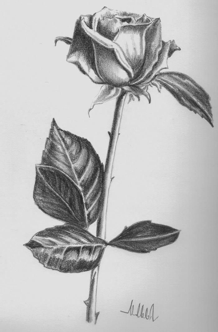 bonito dibujo de rosa a lapiz fenomenales ideas de rosaspdibujadas en blanco y negro