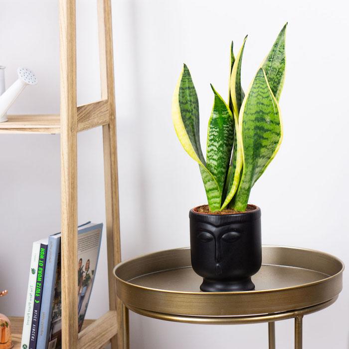 decoracion salon con plantas verdes ideas sobre como decorar la casa fotos de plantas verdes para decorar planta jade