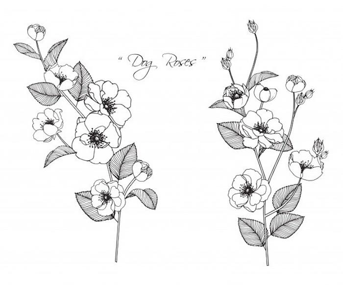 dibujos de flores faciles y originales ideas de dibujos para redibujar dibujos con acuarelas y dibujos a lapiz