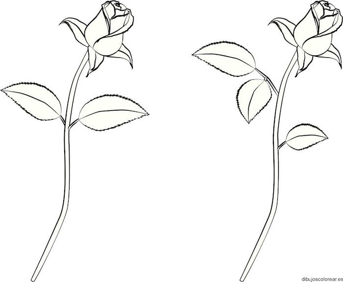 dos rosas dibujos originales ideas faciles para dibujar una rosa dibujos de flores bonitos