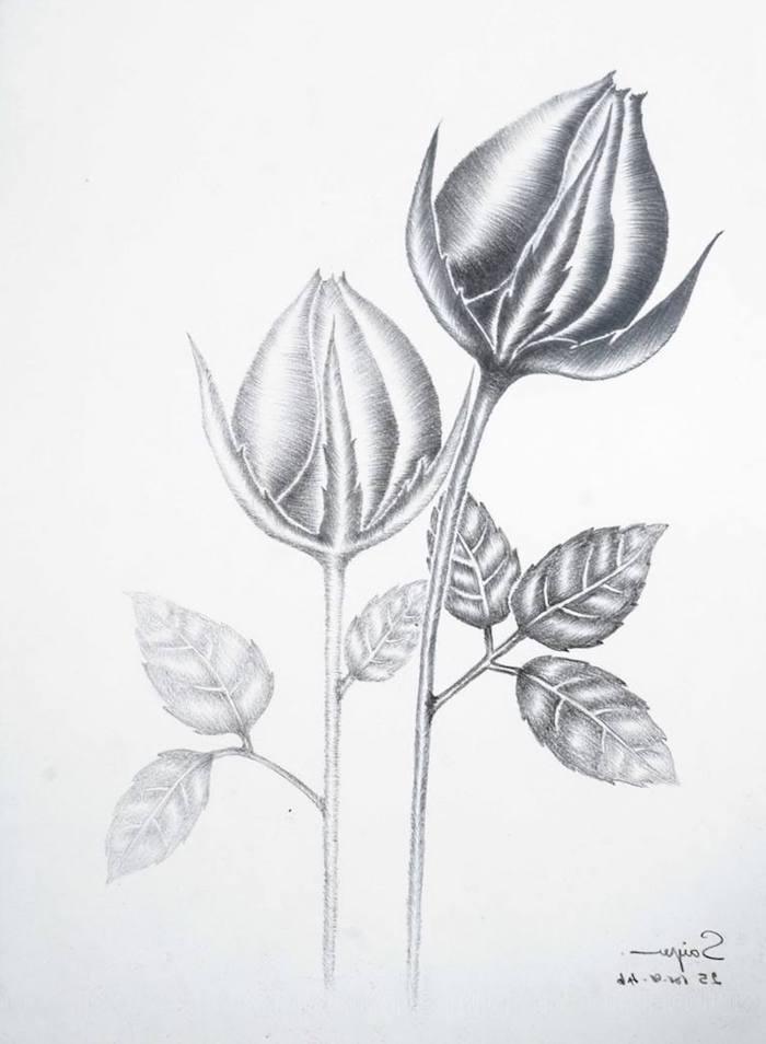 los mejores0dibujos de rosas para inspirarte dibujos faciles y bonitos fotos de dibujos chulos oara redibujat