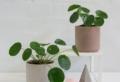 Plantas para la buena suerte: todo lo que necesitas saber