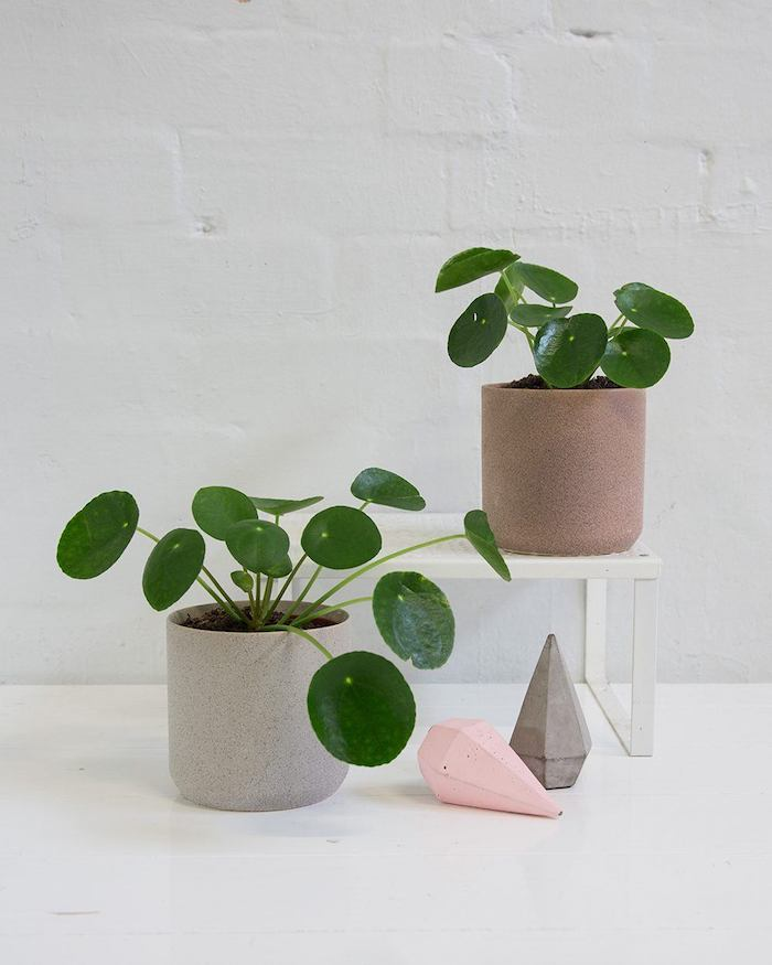planta de dinero ideas de plantas que traen buena suerte y harmonia en casa fotos de plantas que puedes tener en tu hogar