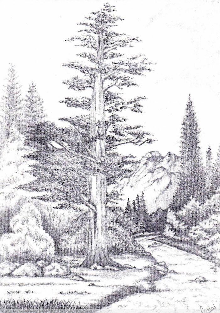 propuestas de dibujos a lapiz dibujos de bosque arboles ideas de dibujos en blanco y negro para descargar fotos de dibujos
