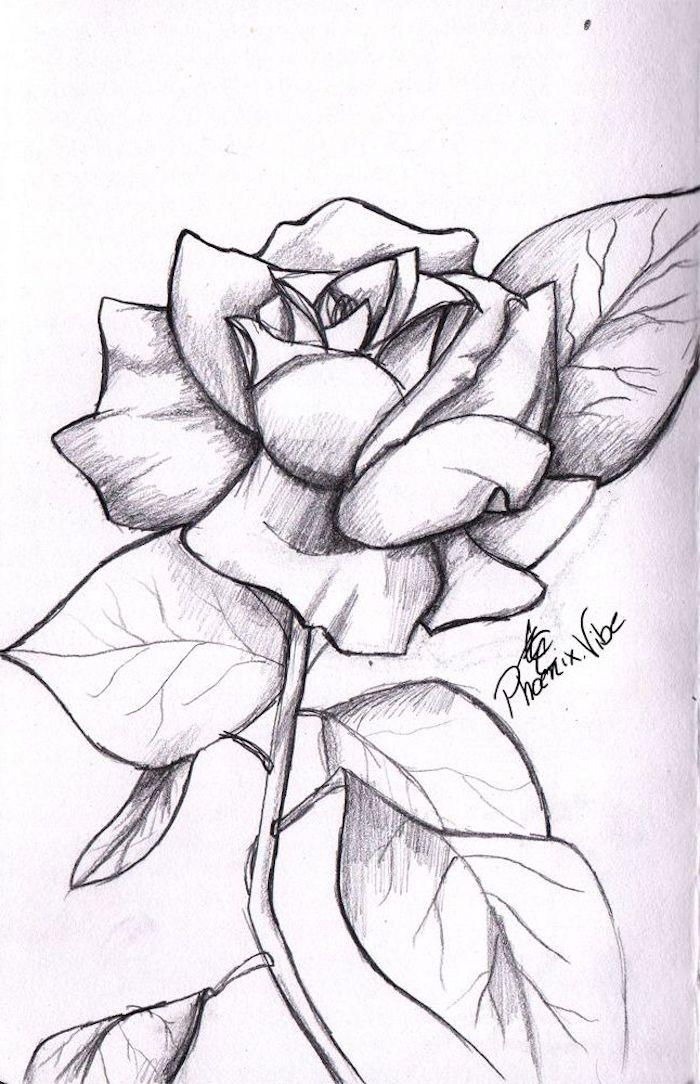 propuestas de dibujos de rosas fotos de dibujos a lapiz de flores como dibujar a lapiz ideas para principiantes