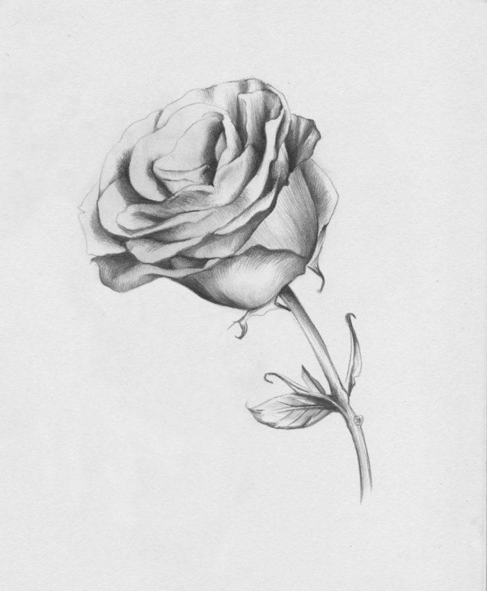 rosa en blanco y negro dibujos a lapiz simbolicos dibujos faciles para dibujar a dibujar una rosa principiantes