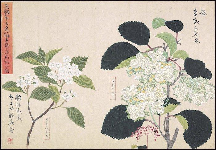 botanios dibujos originales bonitos ideas de dibujos animados japoneses y dibujos chulos