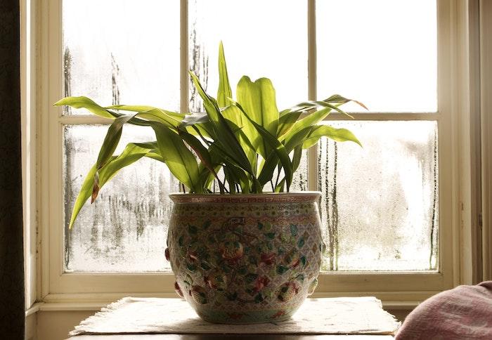 humedad ventana verde planta interior humedad por vidrio