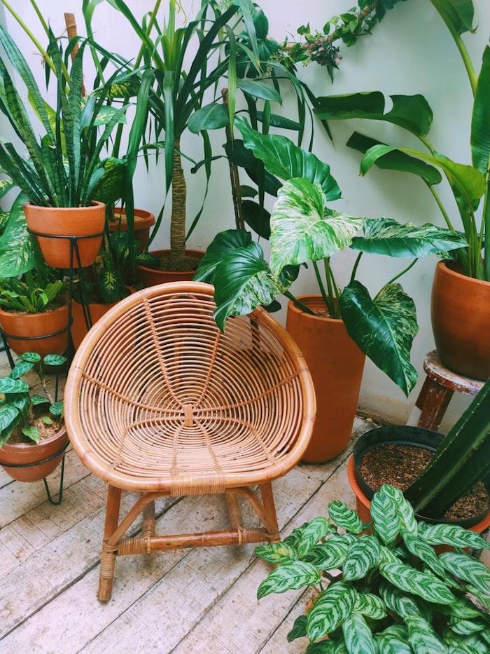 silla rattan grandes plantas verdes para terraza